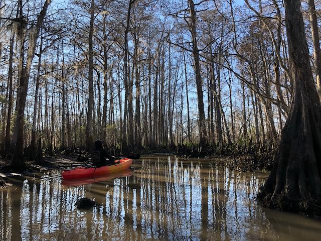 kayaking in swamp