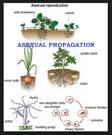 Sexual propagation of plants