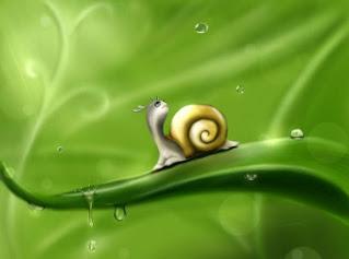 Pest Snail Infestation