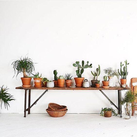 Atelier rue verte le blog collectif project inside for Conseil sur les plantes