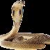 cobra-king-snake-in-india
