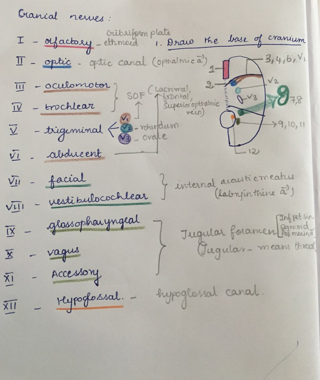 Medicowesome: Mnemonic for foramen of cranial nerves