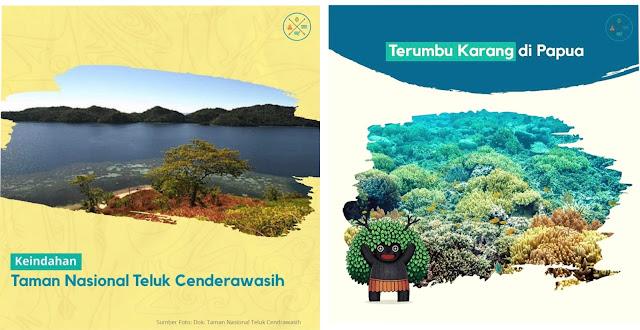 taman-nasional-teluk-cendrawasih-di-hutan-papua-sebagai-wilayah-konservasi-dunia
