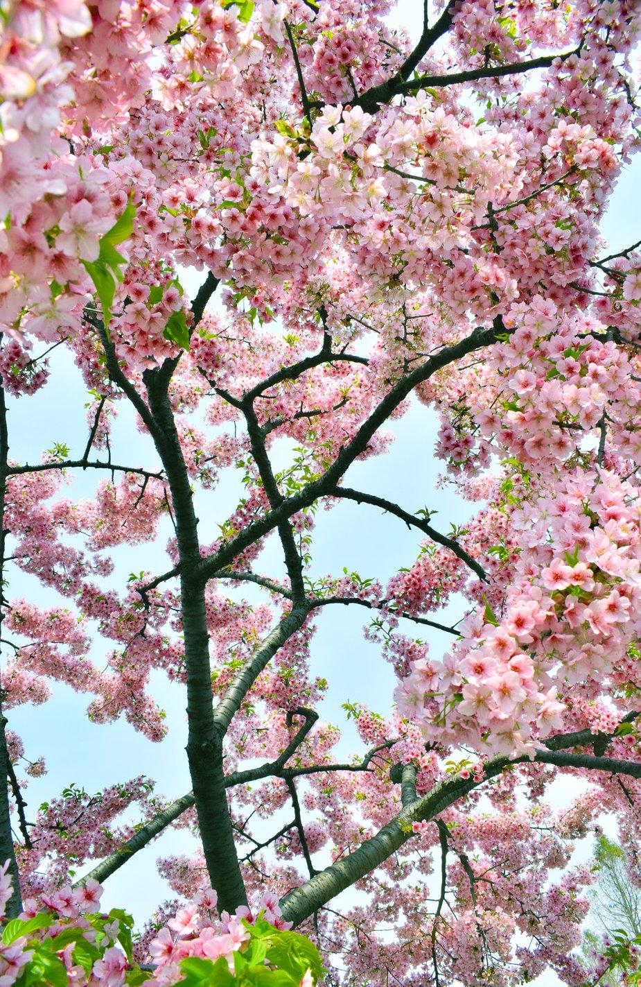 Flower Wallpaper In Hd