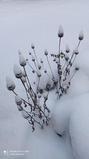 co posadzić wiosna i latem