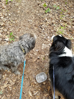 Two leashed dogs on a hiking trail