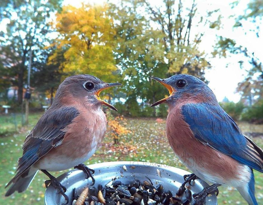 A Woman Put A Photo Booth For Birds In Her Yard, And The Results Are Mind-Blowing