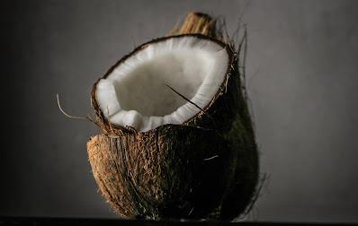 kelapa permata hutan