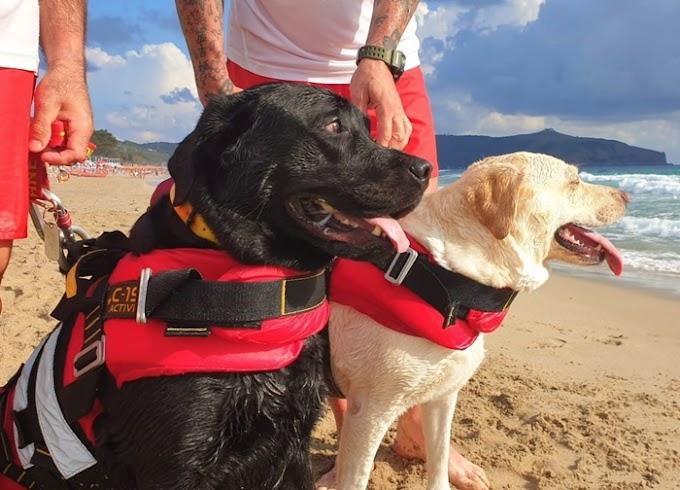 Cani bagnino eroi salvano 15enne in balia delle onde