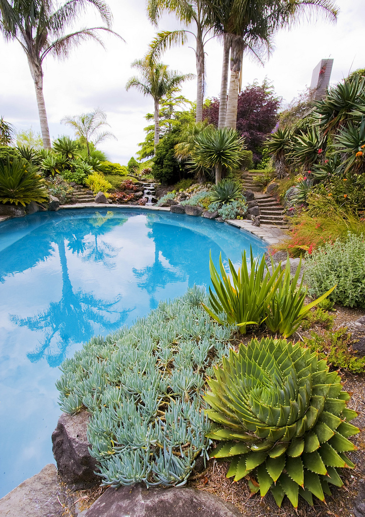 Casual casa low litter succulents and cacti by pools for Pool in the garden