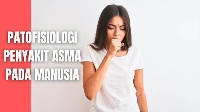 Patofisiologi Penyakit Asma Pada Manusia Penyakit asma adalah proses inflamasi dan hipereaktivitas saluran napas yang akan mempermudah terjadinya obstruksi jalan napas. Kerusakan epitel saluran napas, gangguan saraf otonom, dan adanya perubahan pada otot polos bronkus juga diduga berperan pada proses hipereaktivitas saluran napas.   Peningkatan reaktivitas saluran nafas terjadi karena adanya inflamasi kronik yang khas dan melibatkan dinding saluran nafas, sehingga aliran udara menjadi sangat terbatas tetapi dapat kembali secara spontan atau setelah pengobatan. Hipereaktivitas tersebut terjadi sebagai respon terhadap berbagai macam rangsang.  Dikenal dua jalur untuk bisa mencapai keadaan tersebut. Jalur imunologis yang terutama didominasi oleh IgE dan jalur saraf otonom. Pada jalur yang didominasi oleh IgE, masuknya alergen ke dalam tubuh akan diolah oleh APC (Antigen Presenting Cells), kemudian hasil olahan alergen akan dikomunikasikan kepada sel Th ( T penolong ) terutama Th2 .   Sel T penolong inilah yang akan memberikan intruksi melalui interleukin atau sitokin agar sel-sel plasma membentuk IgE, sel-sel radang lain seperti mastosit, makrofag, sel epitel, eosinofil, neutrofil, trombosit serta limfosit untuk mengeluarkan mediator inflamasi seperti histamin, prostaglandin (PG), leukotrien (LT), platelet activating factor (PAF), bradikinin, tromboksin (TX), dan lain-lain.   Sel-sel ini bekerja dengan mempengaruhi organ sasaran yang dapat menginduksi kontraksi otot polos saluran pernapasan sehingga menyebabkan peningkatan permeabilitas dinding vaskular, edema saluran napas, infiltrasi sel-sel radang, hipersekresi mukus, keluarnya plasma protein melalui mikrovaskuler bronkus dan fibrosis sub epitel sehingga menimbulkan hipereaktivitas saluran napas. Faktor lainnya yang dapat menginduksi pelepasan mediator adalah obat-obatan, latihan, udara dingin, dan stress.  Selain merangsang sel inflamasi, terdapat keterlibatan sistem saraf otonom pada jalur non-alergik dengan hasil