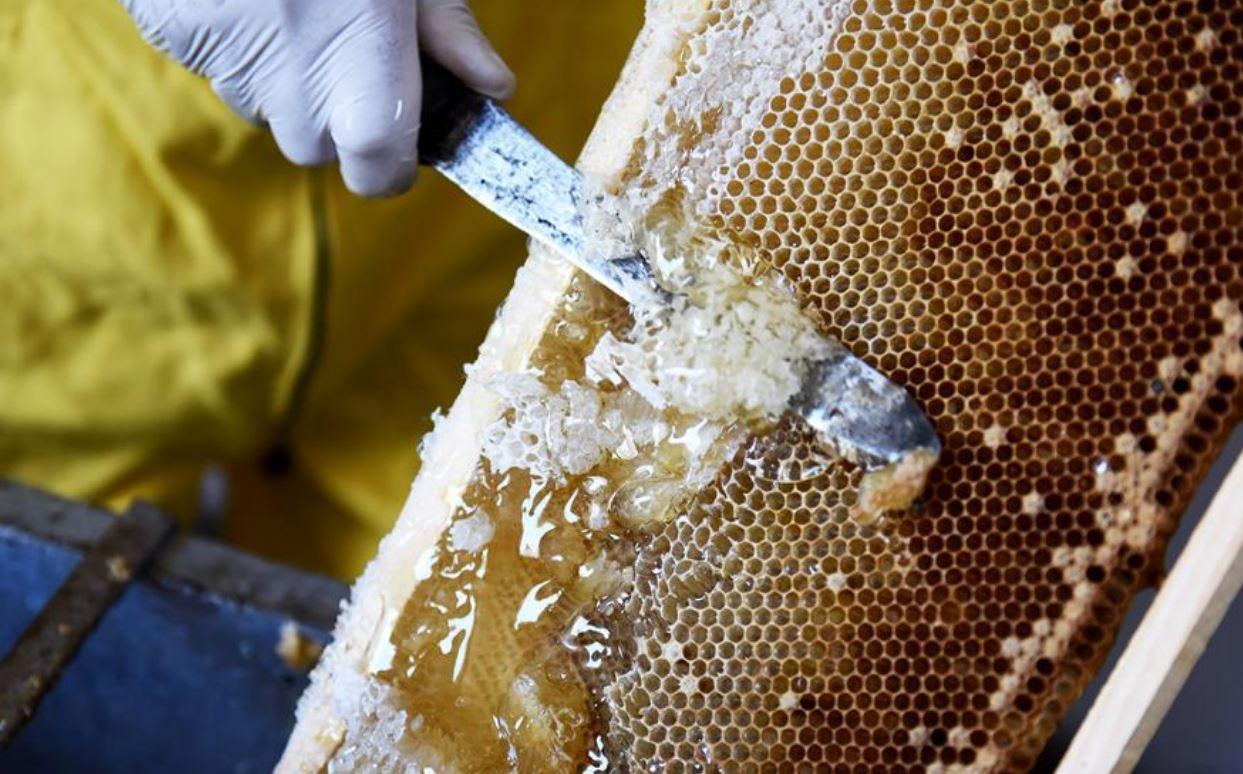 70 ألف ريال عماني مبيعات نحّالي العسل في منافذ التسويق
