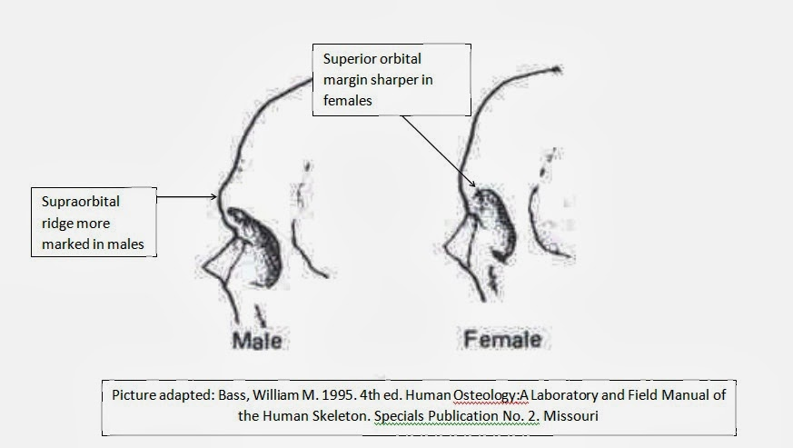 Intercourse Between Male And Female Humans