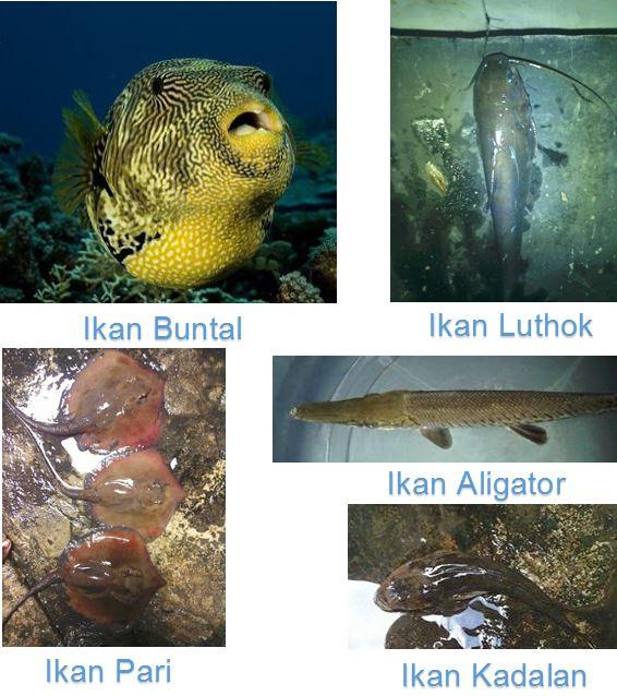 Jenis Ikan Berbahaya - Para Pemancing Harus Hati Hati