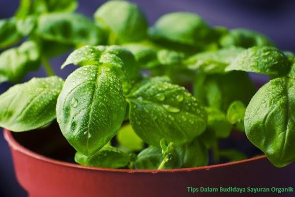 Tips Dalam Budidaya Sayuran Organik