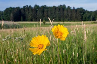 Giralda Farms Preserve in Chatham Township Opens to the Public on Saturday, National Trails Day