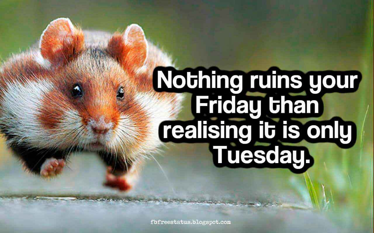 Nothing ruins your Friday than realising it is only Tuesday.