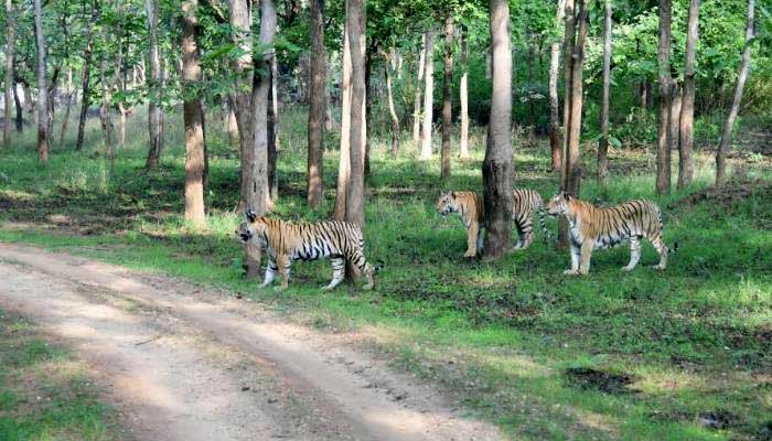 wildlife news, the wildlife india, wildlife,