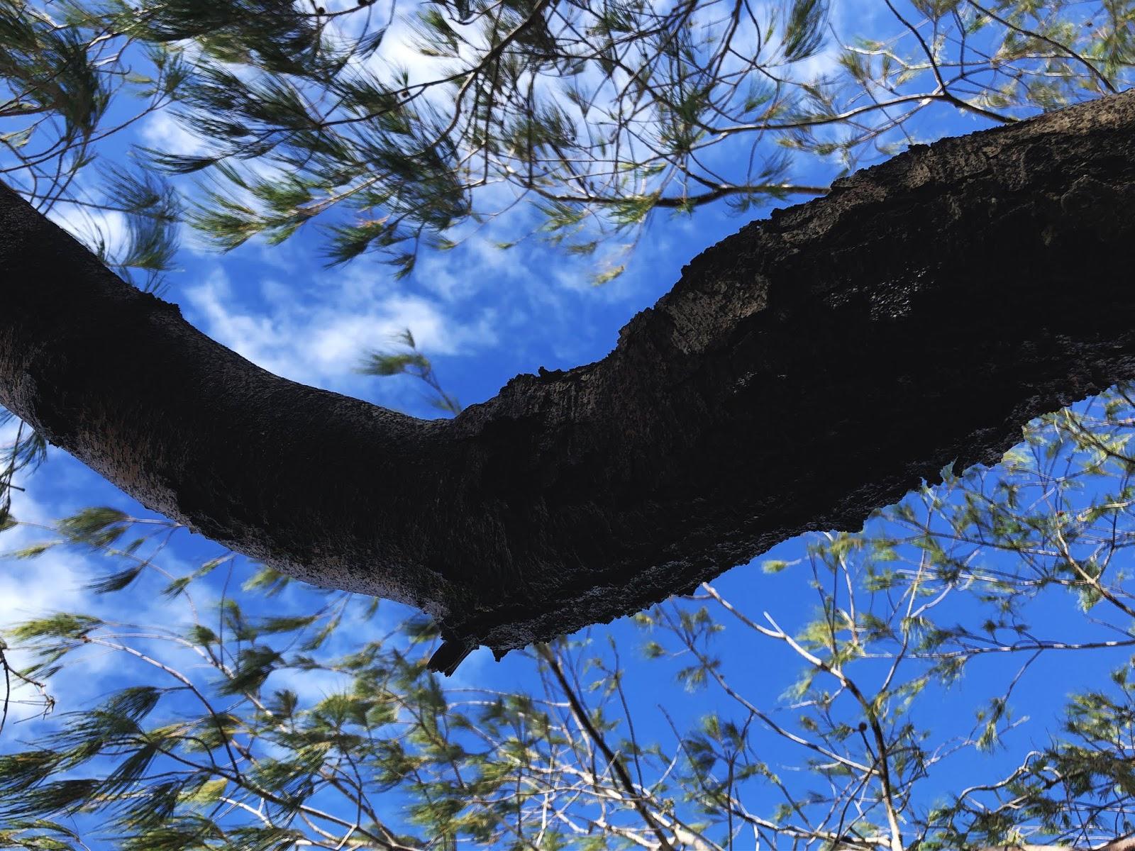 Bribie Island National Park and Recreation Area - gałąź na tle nieba.