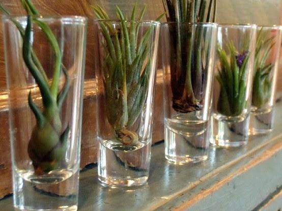 Deco for all mil y una forma de tener plantas en casa for Decoracion con plantas suculentas