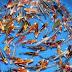 Cara Perawatan Ikan Koi Bagi Pemula