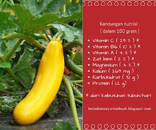 Kandungan nutrisi pada Zukini