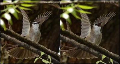 Cara Jitu Perawatan Harian Burung Terucuk