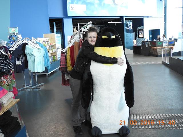 Penguin in Phillip Island