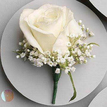 white rose wallpaper image