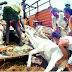 जिस देश मे गाय को माता माना जाता है, वही देश दुनिया को सबसे ज़यादा गाय का मांस (BEEF) बेचता है 😢