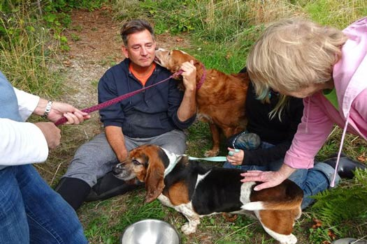 Phoebe dan Tillie Anjing Ini Tak Makan Minum Selama 7 Hari Demi Menjaga Sahabatnya