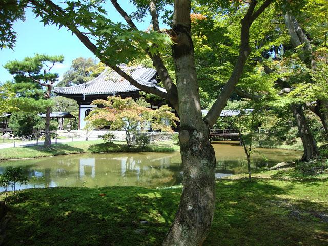 padiglioni si specchiano sull'acqua all'interno del giardino