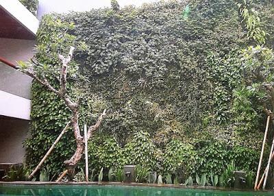 Tukang Taman Vertikal Surabaya | Vertical Garden 9