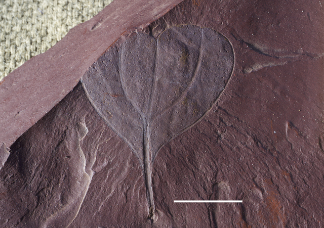 Newly discovered Labrador fossils give clues about ancient climate