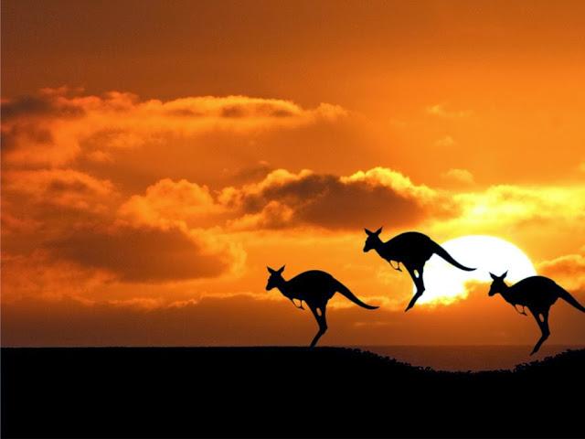 Kangaroos Wallpapers