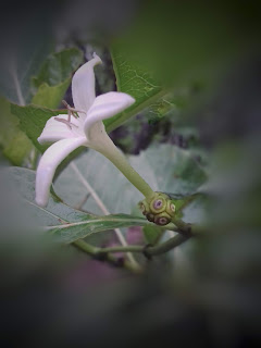 Fruit Flower