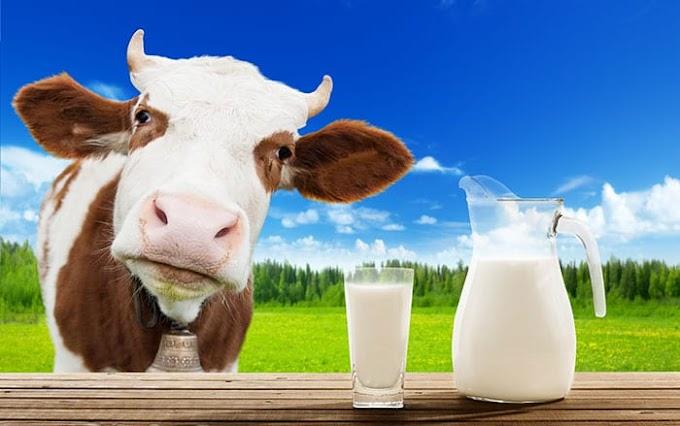 Susu Mengandung 20 Jenis Obat Penghilang Rasa Sakit, Antibiotik, dan Hormon Pertumbuhan Sintetis