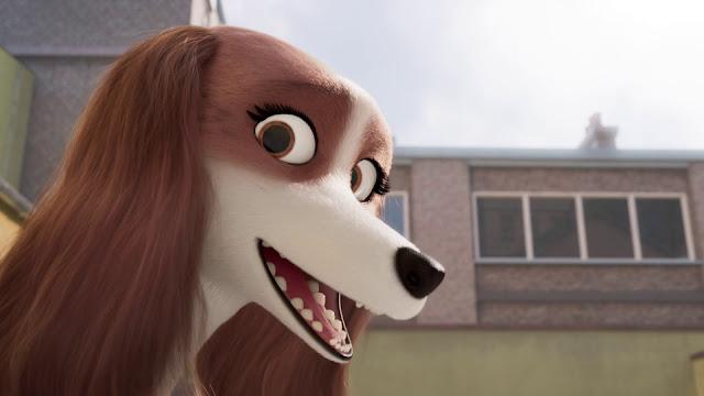 Corgi Un Perro Real imagenes hd