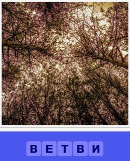 вид снизу на верх ветви деревьев и видно небо между ними