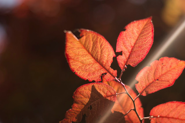 Amit idén ősszel mindenképp...