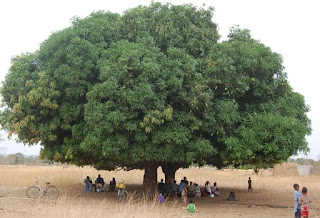 story on tree in hindi ,story of tree in hindi,very short story on tree in hindi,very short story  on save tree