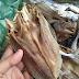 Ikan Asing Budu Talang, Oleh-Oleh Khas Masyarakat Sibolga