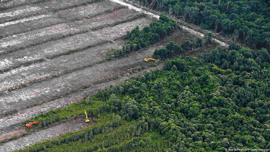 Indonesia Dianggap Lebih Maju untuk Urusan Perlindungan Hutan, Padahal?