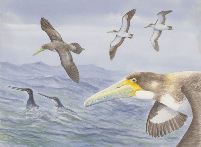 Toothed fossil from New Zealand rewrites history of seabird family