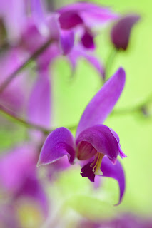 pink tropical orchid flowers