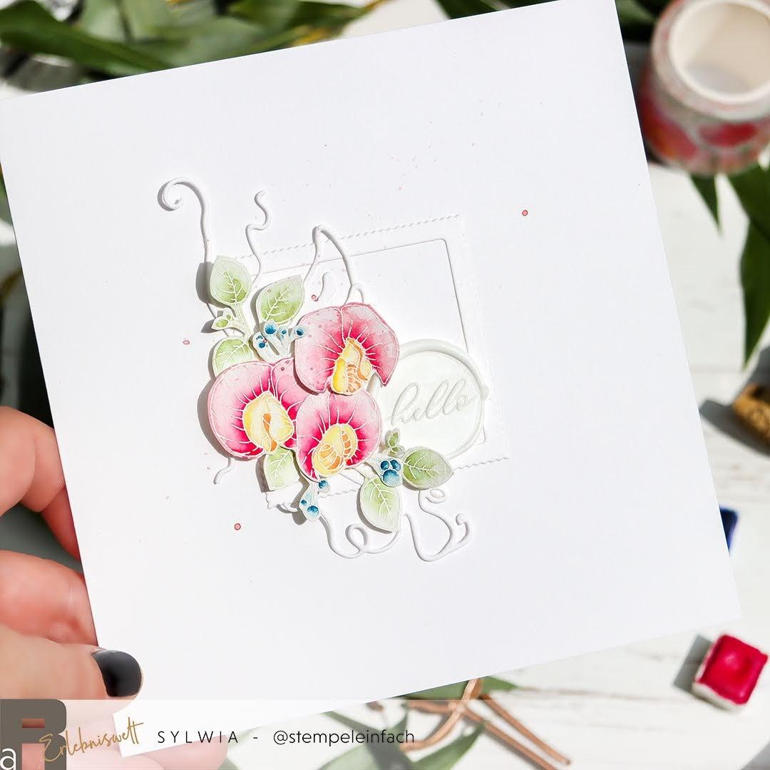 Aquarellkarte-Wicken-Renke