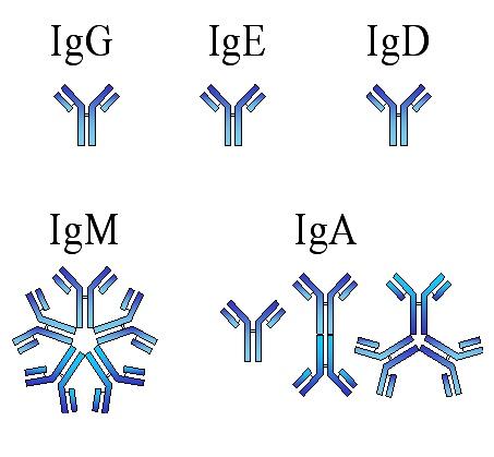rubeola igm reagente o que significa