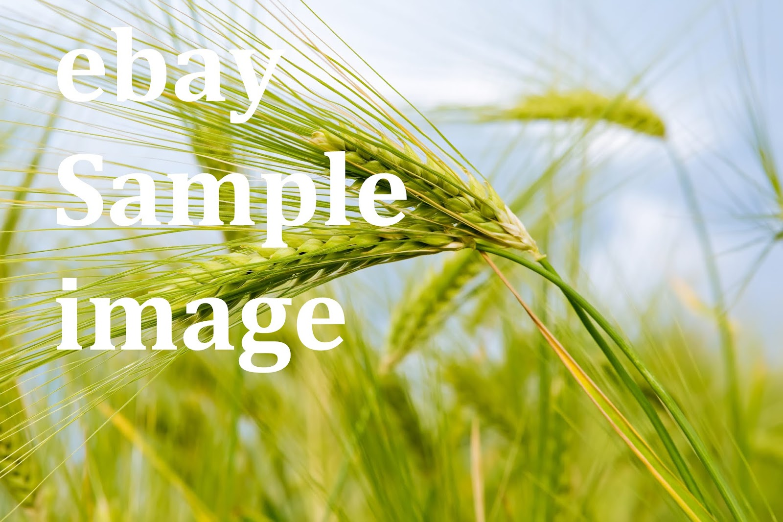 New Desktop** Image** Closeup/_Ear/_botany/_Nature Original Background Vision ***