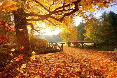 أفضل الأماكن لقضاء عطلة الخريف  في هولندا