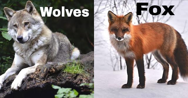 10 हमशकल जीव जिनके बीच आप फर्क ही पता नहीं कर पाते | 10 Pairs of Commonly Confused Animals in Hindi